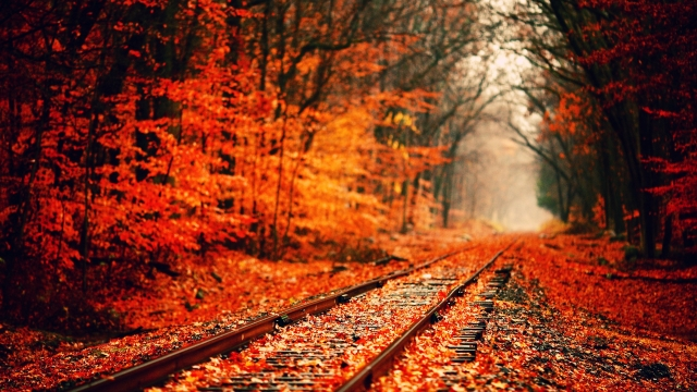 6991453-fall-wallpaper-hd