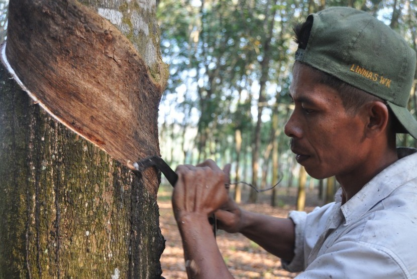 petani-menyadap-pohon-karet-di-kebunnya-yang-berada-di-_140813101931-982